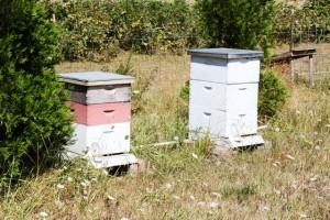 honey-harvest-3