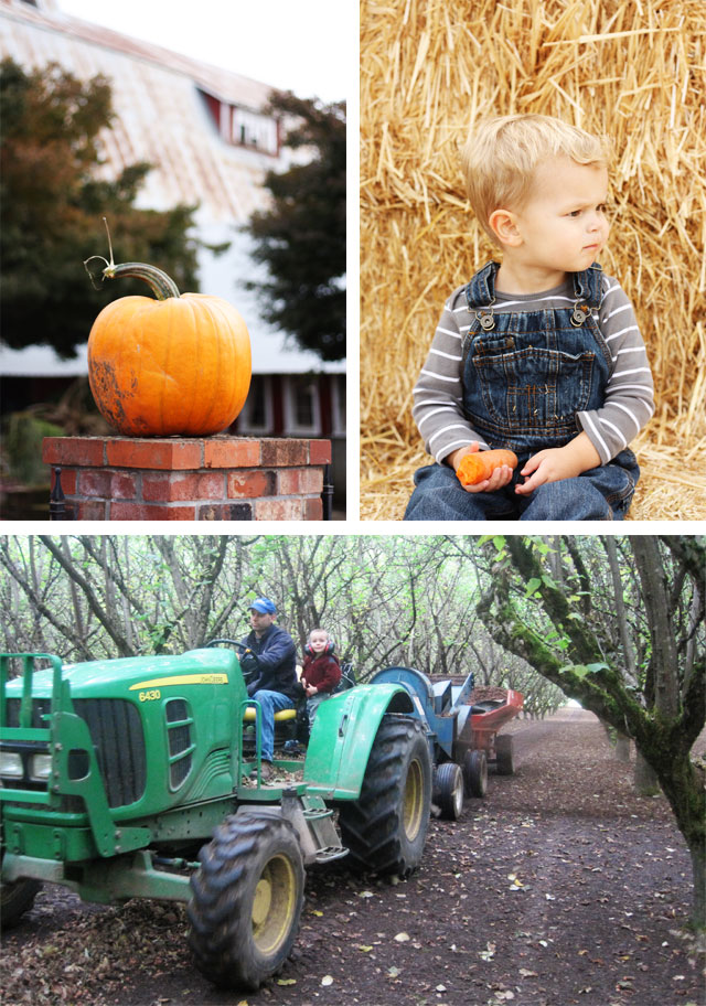 Our trip to a local pumpkin patch!