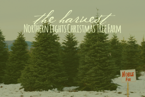 northern-lights-christmas-tree-farm