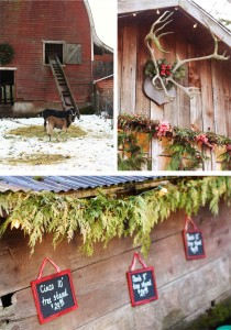 northern-lights-christmas-tree-farm-1