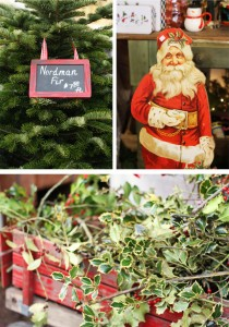 The Harvest: Northern Lights Christmas Tree Farm - Lulu the Baker