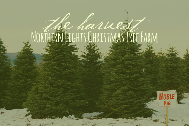 The Harvest: Northern Lights Christmas Tree Farm
