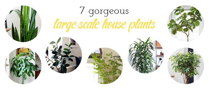 Dream house updates indoor climbing walls the hunt for house plants lulu the baker - Best big indoor plants ...