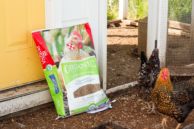 We feed our chickens Purina Organic Chicken Feed