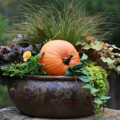 Get your front porch ready for Fall with a gorgeous container garden.