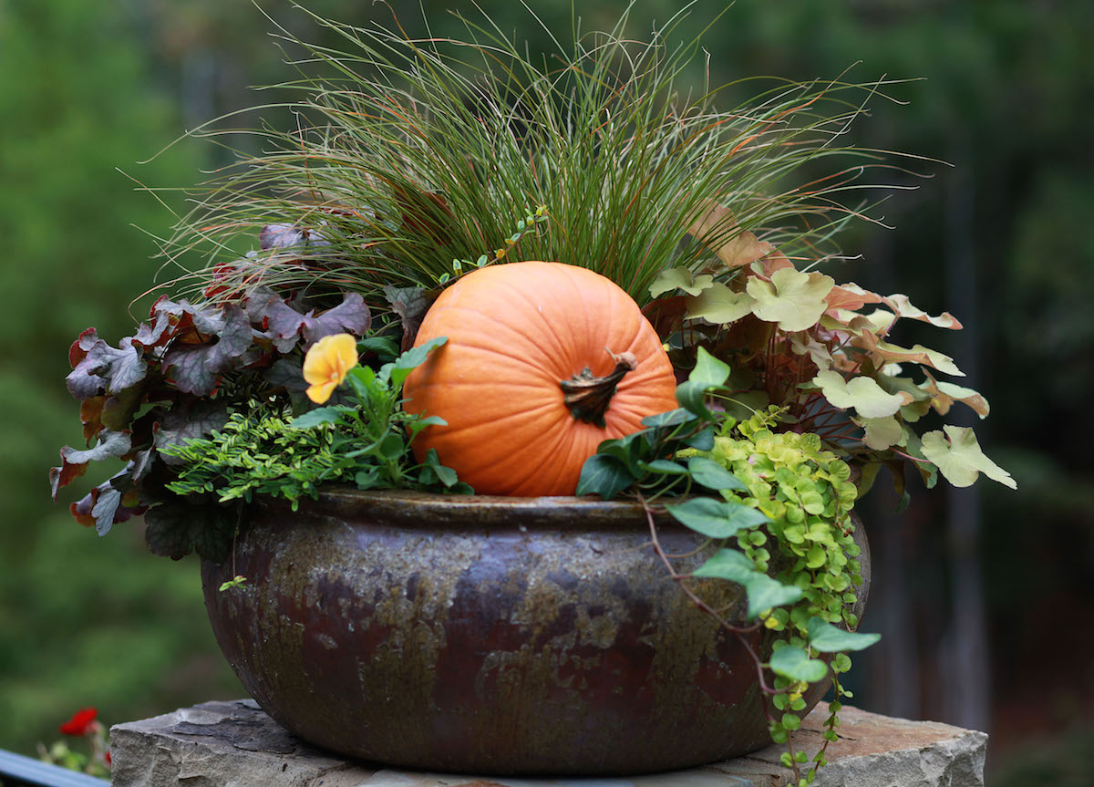 Fall container gardens are a quick, easy way to get your front porch ready for the season!
