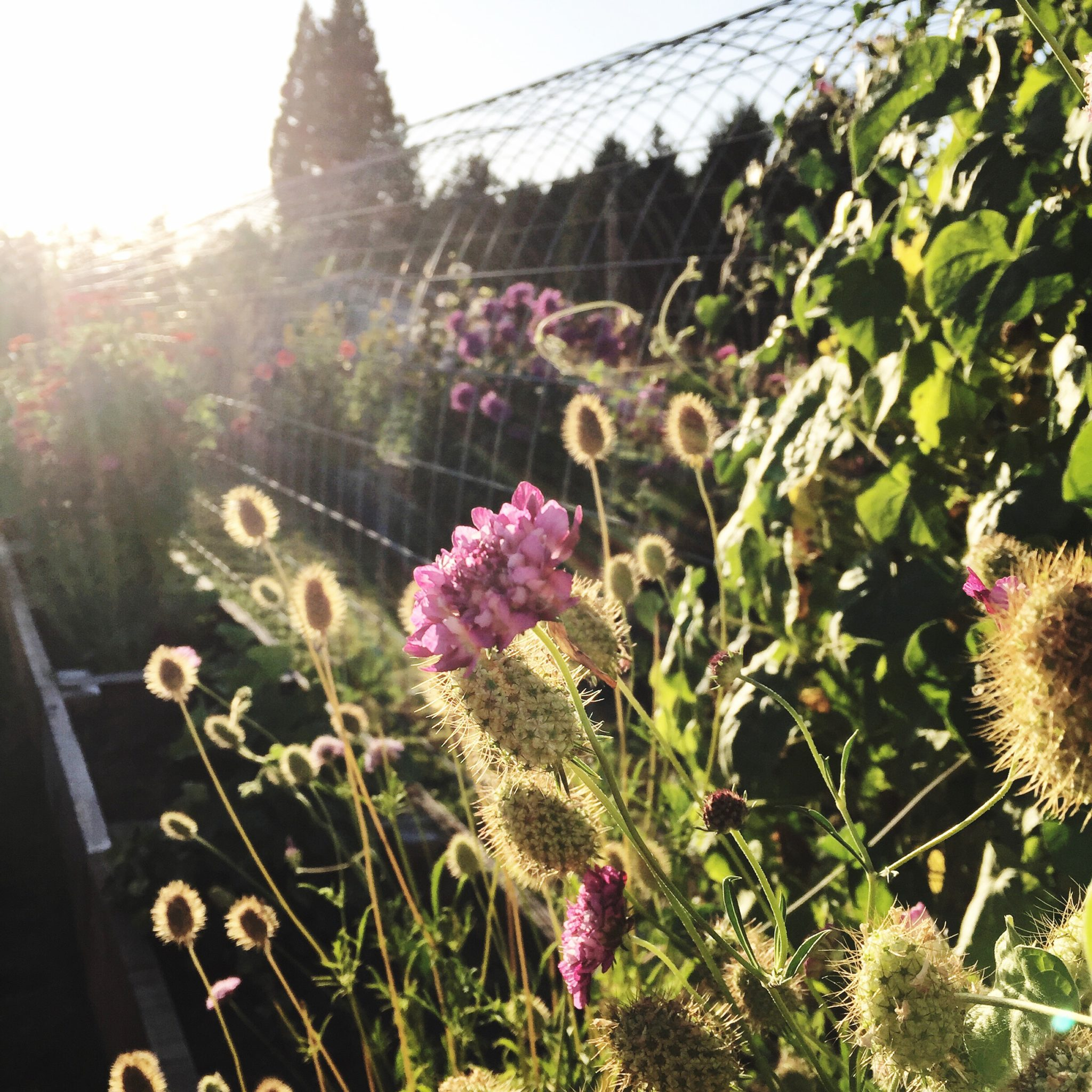 the flower garden in the evening sunshine