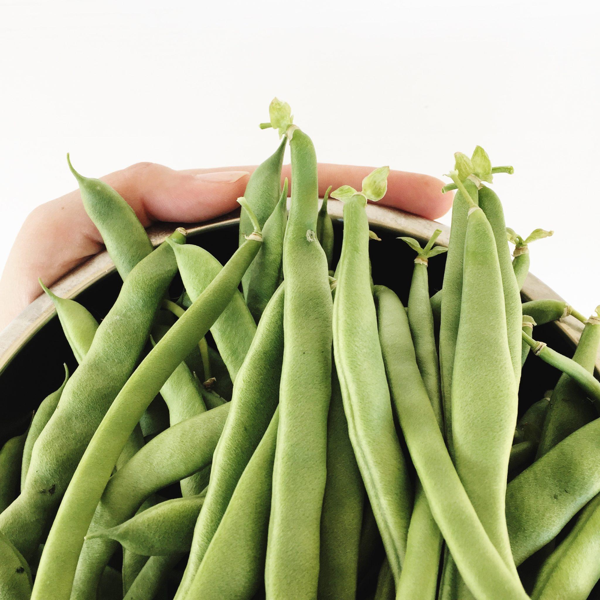 garden fresh green beans