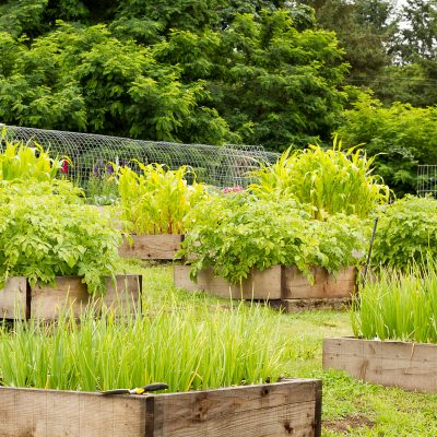 How we designed our backyard vegetable, fruit, and cut flower garden with rows of raised beds